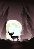 månskenfullvuxen hankronhjort Royaltyfria Bilder