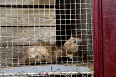 Mård i zoo Arkivfoto