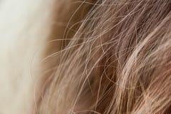 Mèche di capelli marrone chiaro immagine stock libera da diritti