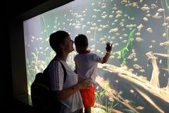 Mère avec l'espèce marine de observation de fils Images libres de droits