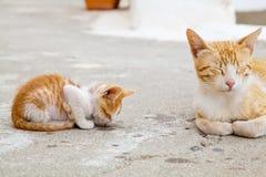 Mère-chat et son chaton rouge de sommeil image stock