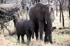 Mère d'éléphant Image libre de droits