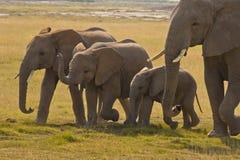Mère d'éléphant et ses trois enfants Images libres de droits