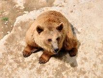 Mère d'ours de Brown en stationnement d'ours, Berne, Suisse Photographie stock