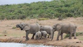 mère de famille d'éléphant de noix de coco de veau de chéri près de cheminée de paume Photographie stock libre de droits