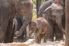 mère de famille d'éléphant de noix de coco de veau de chéri près de cheminée de paume Photographie stock