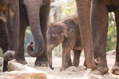 mère de famille d'éléphant de noix de coco de veau de chéri près de cheminée de paume Images libres de droits