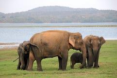 mère de famille d'éléphant de noix de coco de veau de chéri près de cheminée de paume images stock