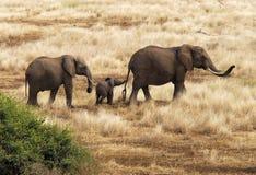 mère de famille d'éléphant de noix de coco de veau de chéri près de cheminée de paume photos stock