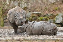 Mère de rhinocéros indien et un bébé dans la belle nature regardant l'habitat images stock