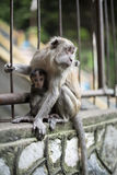 Mère de singe avec le bébé sur la barrière Photo libre de droits