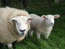 Mère et agneau Images libres de droits