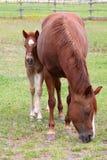 Mère et bébé Image stock