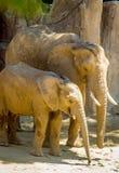 Mère et bébé d'éléphant Images stock