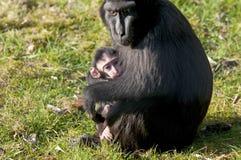 Mère et bébé de Chimpansee Photographie stock libre de droits