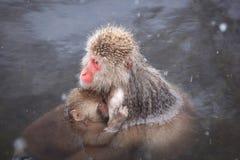 Mère et bébé de singe Photographie stock libre de droits