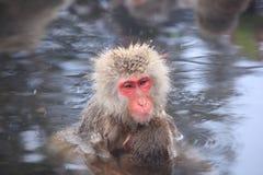 Mère et bébé de singe Photos libres de droits
