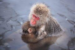 Mère et bébé de singe Images libres de droits