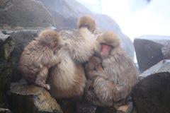 Mère et bébé de singe Photo stock