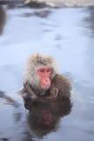 Mère et bébé de singe en source thermale Image libre de droits