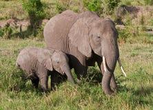 Mère et chéri d'éléphant Photographie stock