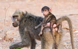 Mère et chéri de babouin Photographie stock libre de droits