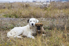 Mère et chiot Photographie stock