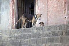 Mère et chiot sans abri de chien avec les museaux drôles, sur une rue de ville Photographie stock