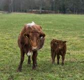 Mère et enfant. Images stock