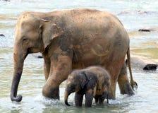 Mère et enfant d'éléphant Images stock