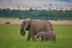 Mère et enfant d'éléphant Image stock