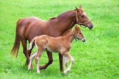 Mère et enfant de cheval Images stock