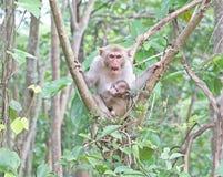 Mère et enfant de singe sur un arbre Photo stock