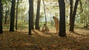 Mère et enfant de sourire heureux ainsi que les feuilles d'érable jaunes dans le jour d'automne photo stock