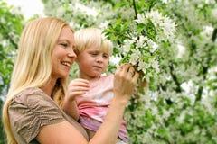Mère et enfant en bas âge regardant fleurissants l'arbre de Crabapple Photos libres de droits