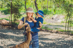 Mère et fils alimentant de beaux cerfs communs des mains dans un zoo tropical Image stock