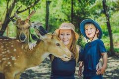 Mère et fils alimentant de beaux cerfs communs des mains dans un zoo tropical Images libres de droits