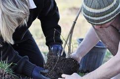 Mère et fils plantant une jeune OU neuve d'arbre ensemble image libre de droits