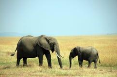Mère et veau d'éléphant Image libre de droits