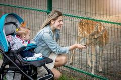Mère heureuse avec son bébé garçon alimentant de beaux cerfs communs dans le zoo Image stock