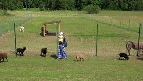 Mère tenant sa peu de fille sur des mains entre beaucoup d'animaux de ferme dans le zoo clips vidéos