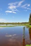 Mètre de niveau de lac : Marécages de Beelier, Australie occidentale Photo libre de droits