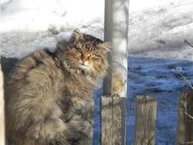 Mécontent avec le chat pelucheux sur la promenade Photo stock