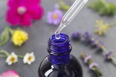 Médecine de fines herbes avec la bouteille de compte-gouttes Photo stock