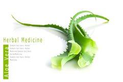 Médecine de fines herbes de vera d'aloès Photo libre de droits