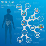 Médico y atención sanitaria infographic, infog del aparato gastrointestinal ilustración del vector