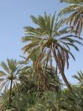 Médio Oriente ou África, paisagens pitorescas das palmeiras ajardinam a fotografia fotos de stock