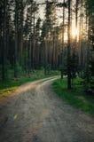 Méditation magique d'effet de fusée de lentille de forêt et photo de détente Photographie stock