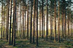 Méditation magique de forêt et photo de détente Photo libre de droits