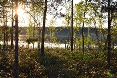 Méditation magique de lac de marais de fleur de forêt et photo de détente Photographie stock